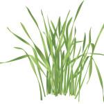 雑草で堆肥は簡単につくれるの?面倒くさがりでも出来るほったらかしの方法は。