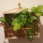 壁掛け植物を100均の商品で!手軽で簡単な作り方
